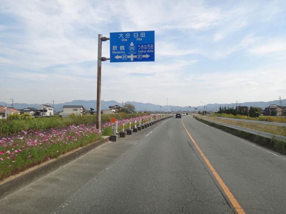株式会社日食 国道210号バイパス 福岡県うきは市吉井町 コスモス
