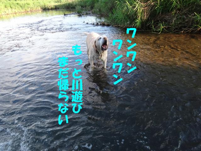 株式会社日食 愛犬ナナ ゴールデン ラブラドール レトリバー お散歩 川遊び