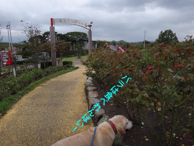株式会社日食 愛犬ナナ ゴールデン ラブラドール レトリバー お散歩 駕与丁公園 福岡県粕屋郡粕屋町