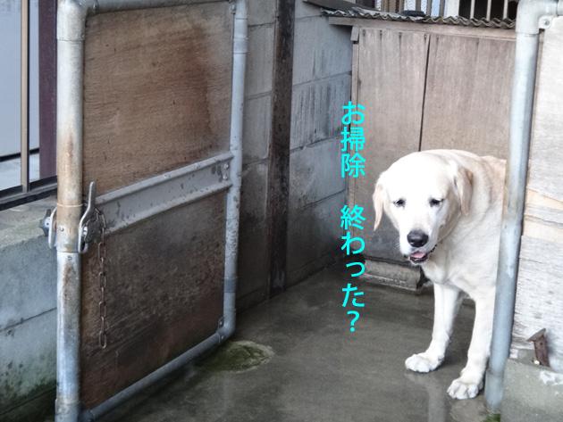 株式会社日食 愛犬ナナ ゴールデン ラブラドール レトリバー
