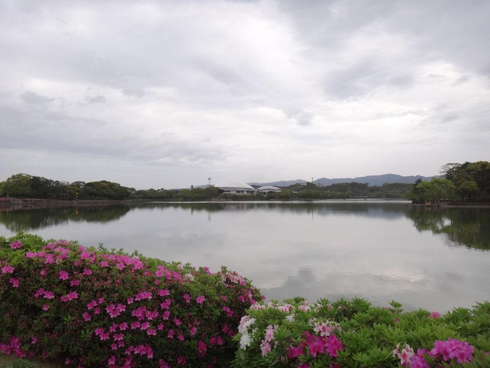 株式会社日食 駕与丁公園(かよいちょうこうえん) 福岡県粕屋郡 粕屋町 ツツジ(躑躅)