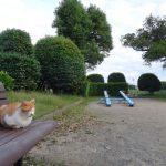 株式会社日食 駕与丁公園(かよいちょうこうえん) 福岡県粕屋郡 粕屋町 猫 ネコ