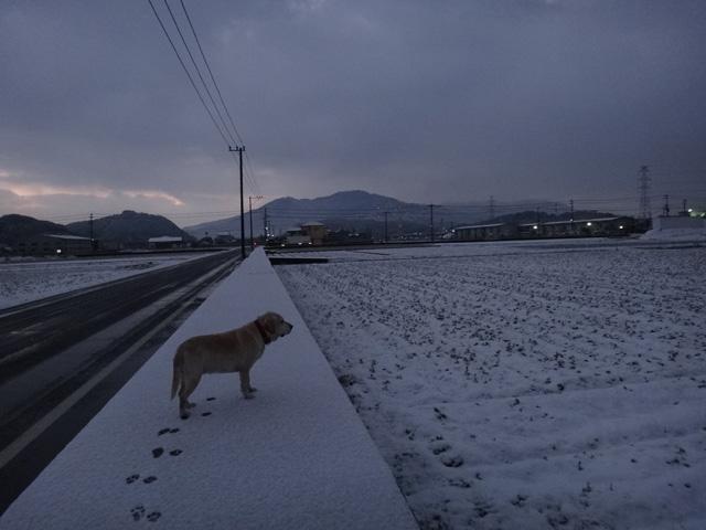 株式会社日食 愛犬ナナ ゴールデン ラブラドール レトリバー 散歩 雪