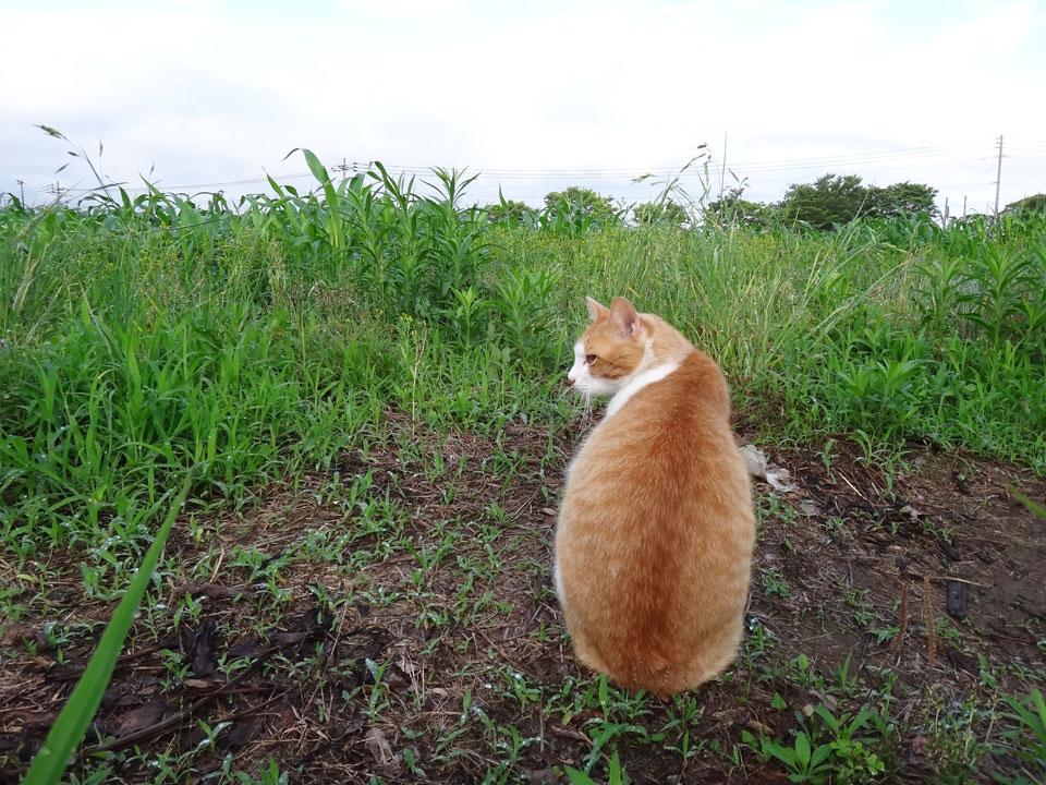 株式会社日食 駕与丁公園(かよいちょうこうえん) 福岡県粕屋郡 粕屋町 猫 ネコ ねこ cat