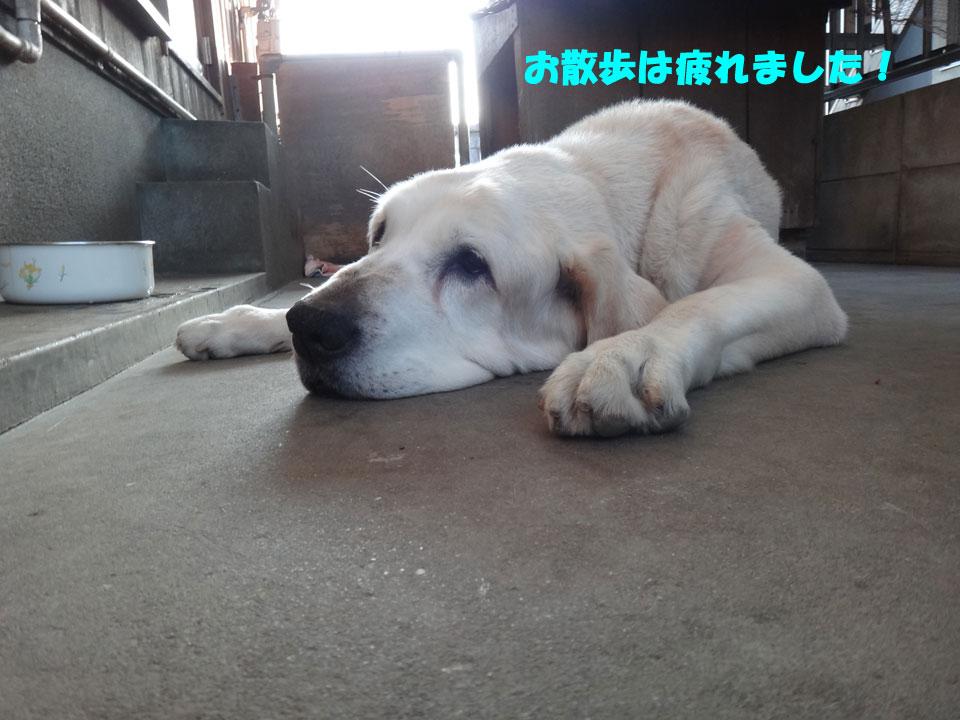 株式会社日食 愛犬ナナ ゴールデンレトリバー ラブラドールレトリバー