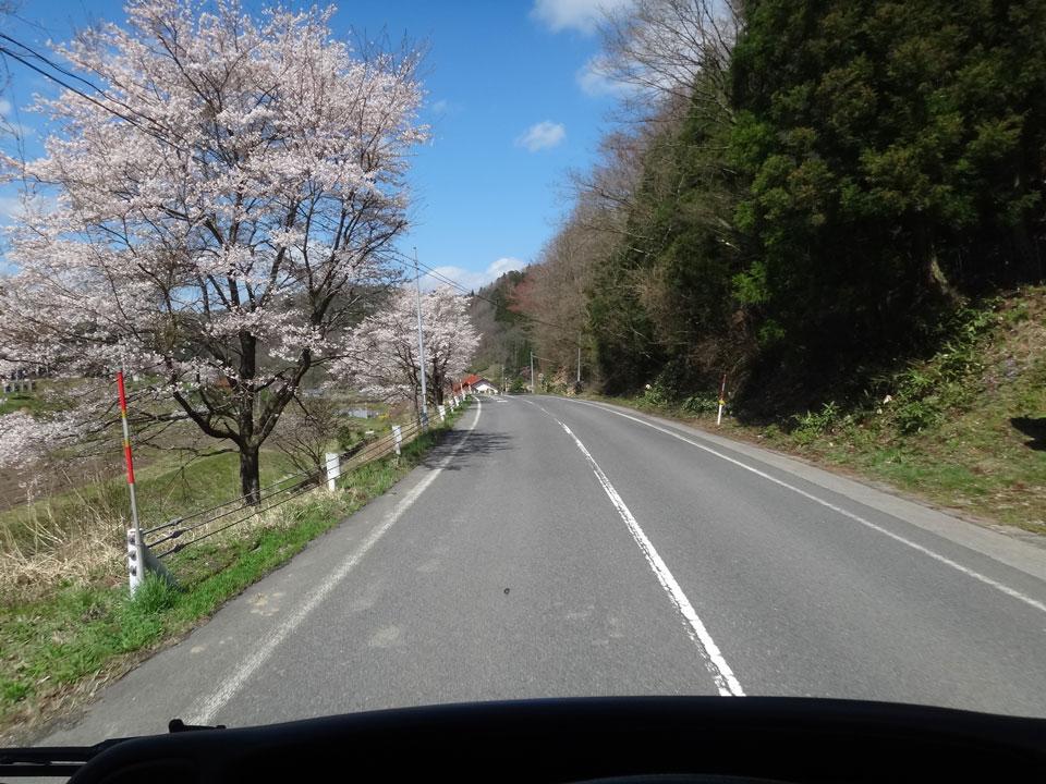 株式会社日食 県道40号線 島根県雲南市掛合町 ソメイヨシノ 桜 満開