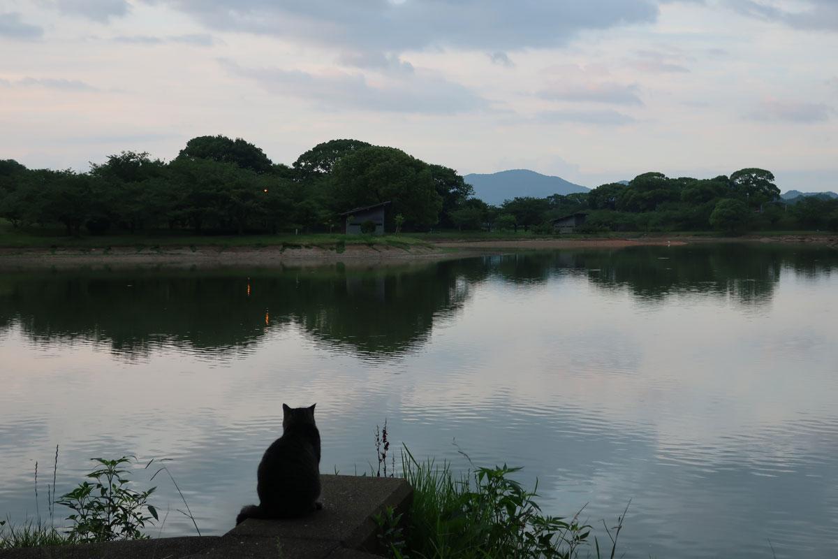 株式会社日食 駕与丁公園(かよいちょうこうえん) 福岡県粕屋郡 粕屋町 ネコ 猫