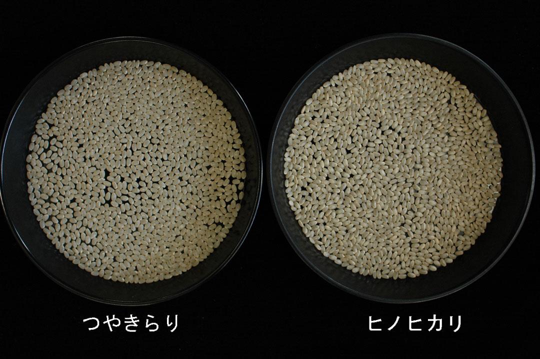株式会社日食 新品種 つやきらり 西海291号 左;つやきらり、右;ヒノヒカリ