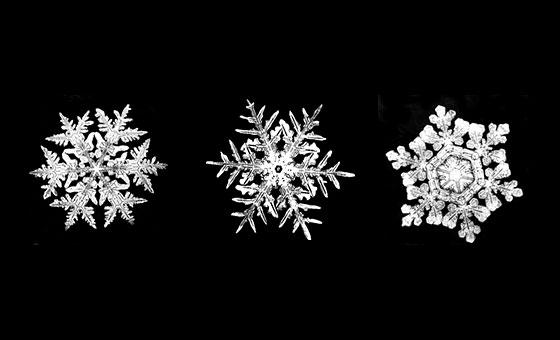 株式会社日食 雪の結晶